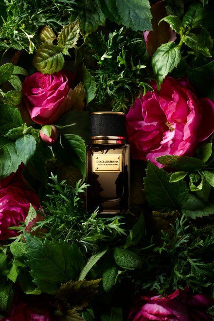 Duftwelten von Dolce & Gabbana